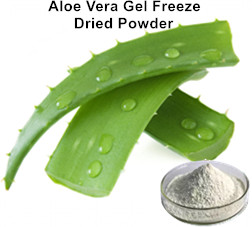 aloe-vera-gel-freeze-dried-powder.jpg